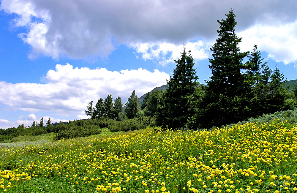 independent and guided hiking tours in vitosha mountains
