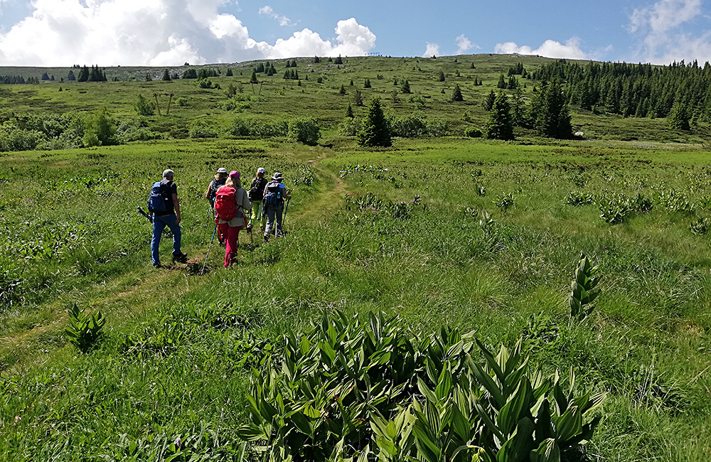guided walking in vitosha mountains